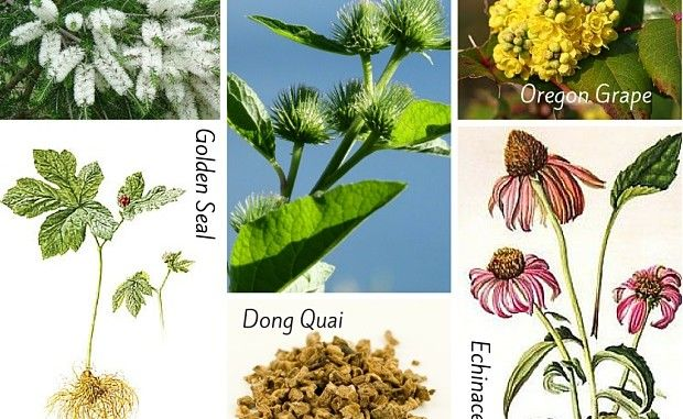 Acne Herbs for Acne - Infographic