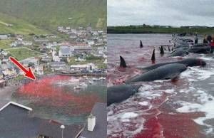 Fiesta sangrienta que rellena el agua del mar de cadáveres y gente cruel.