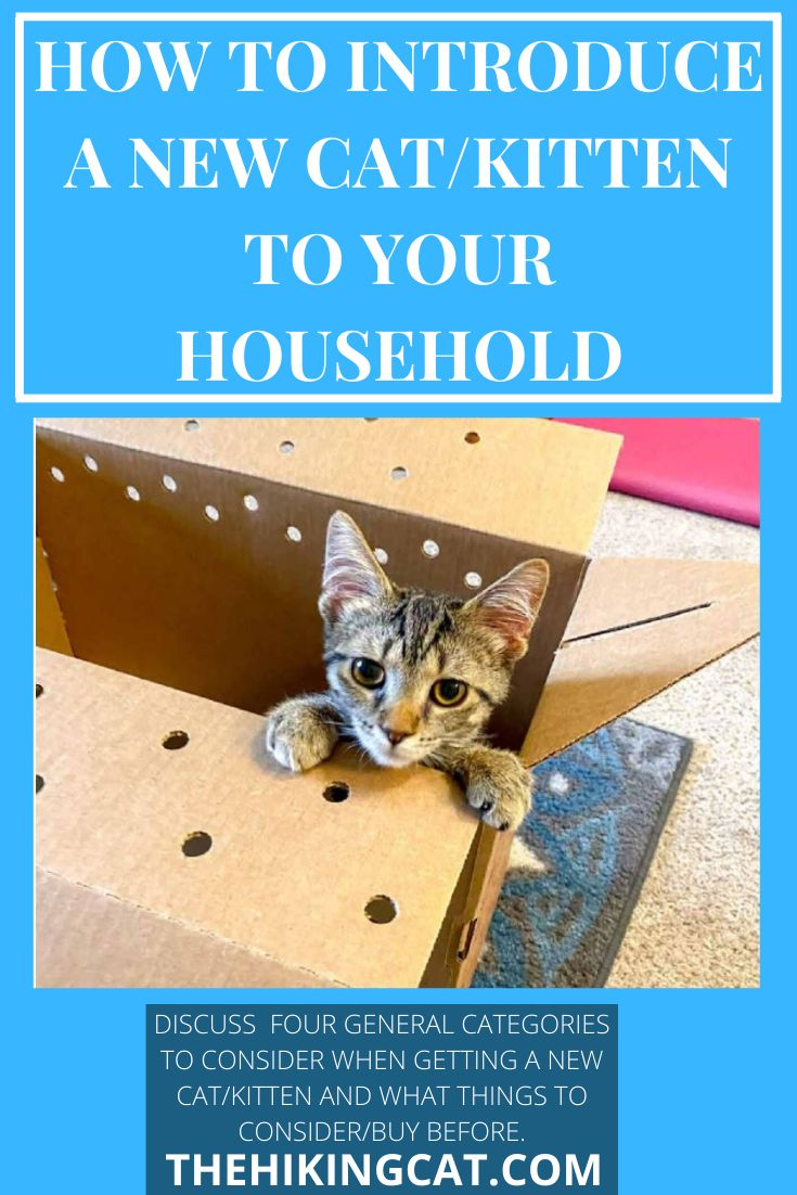 How To Introduce A New Cat Or Kitten To Your Household In 2020 Introducing A New Cat Cats And Kittens Kitten