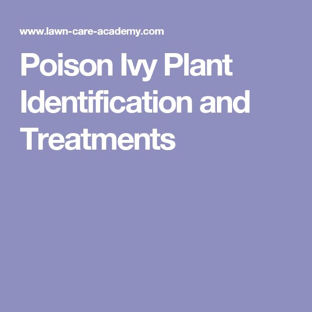 Poison Ivy Plant Identification and Treatments