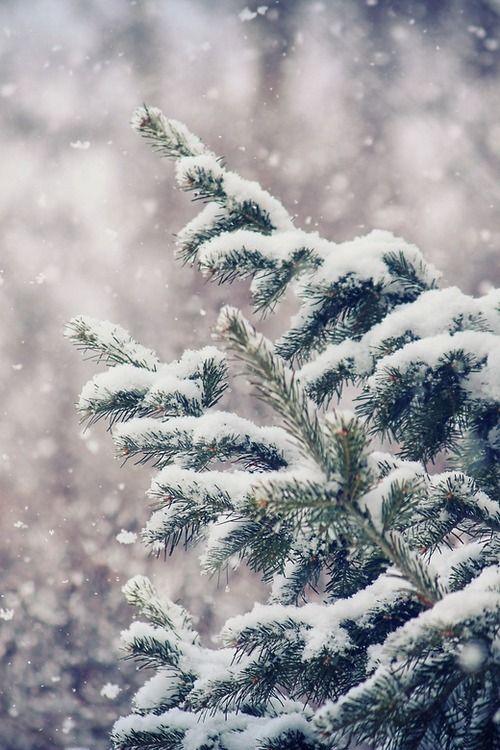 Gentle Snow by (BasH Xero)