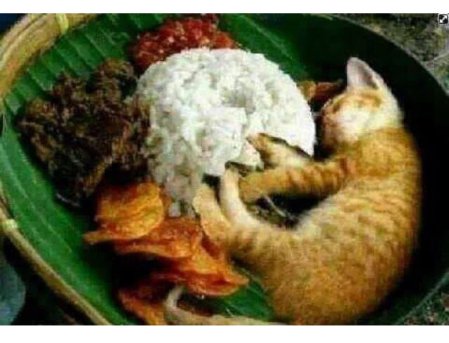 Nasi kucing | Funny Thingy | Pinterest