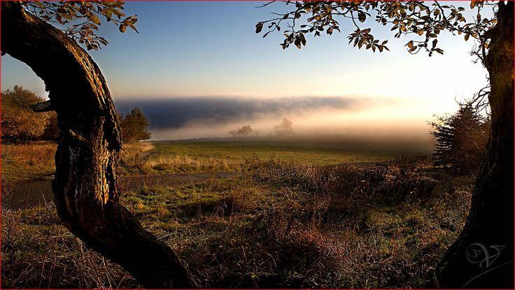 Sunrise through the trees. by Vlastimil MoDDO Vanek on 500px