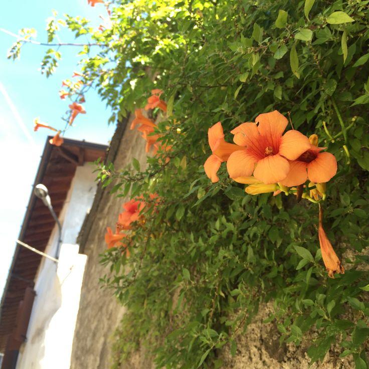 Bloom Italy  made by Anne-Jolijn Goosselink
