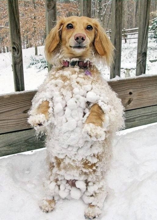 PetsLady's Pick: Funny Snow Dog Of The Day ... see more at PetsLady.com ... The FUN site for Animal Lovers