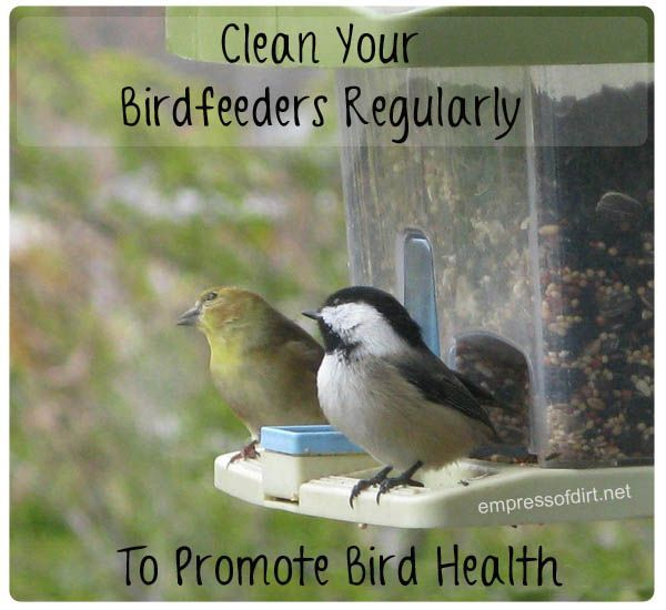 Spectacular Clean your birdfeeders regularly to promote bird health
