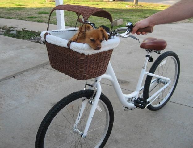 tote bags and carriers for pets, modern design ideas for traveling with pets