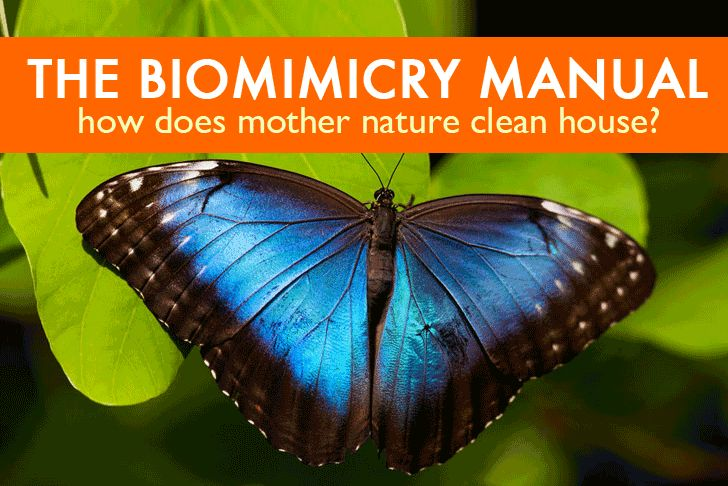 The Biomimicry Manual: How Does Mother Nature Clean House? | Inhabitat - Green…