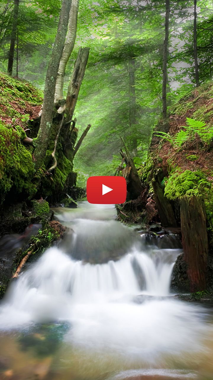Water Stream Photography Forest Creek Photography Forest Creek Woods In 2020 Live Wallpapers Water Beautiful Waterfalls