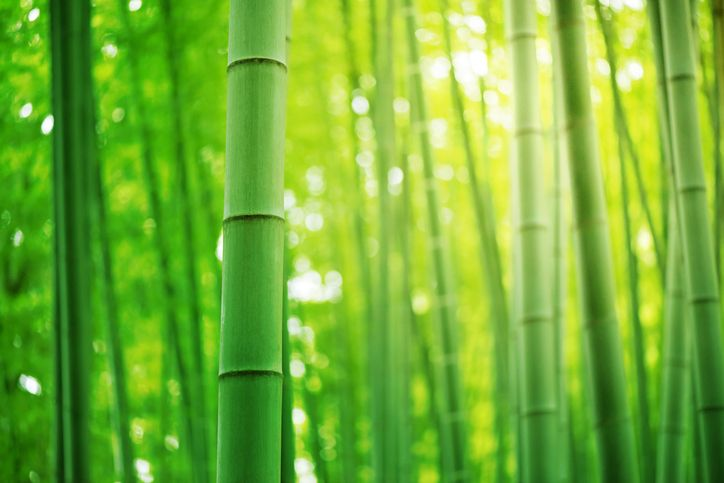 Is Bamboo in the Automotive Industry's Future? What You Might See After Your Auto Mechanic Apprenticeship