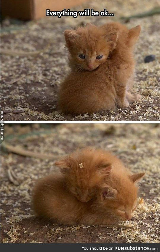 Sometimes, you just need to see an adorable photo of a kitten hug.