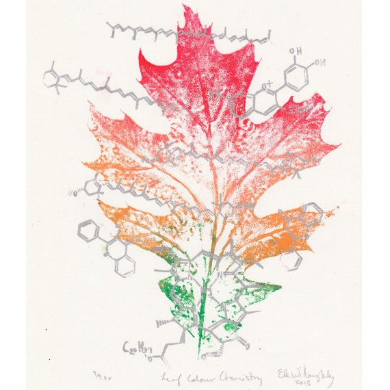 Colour Chemistry Oak Leaf Print and Linocut Leaf Print Lino