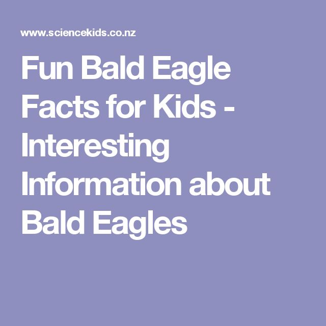 Fun Bald Eagle Facts for Kids - Interesting Information about Bald Eagles