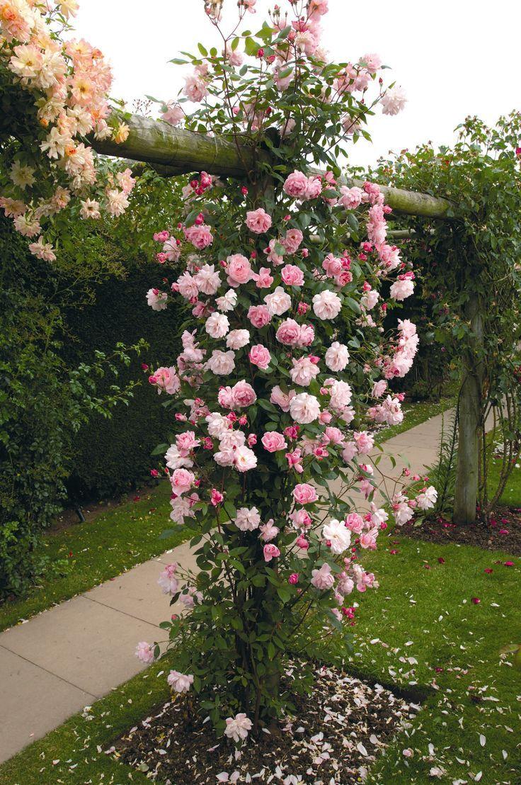 English rose gardens english rose garden seend - All About Garden