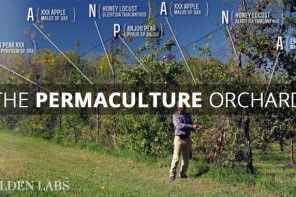 How You Make a Living From a 4 acre Permaculture Orchard