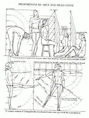 Les proportions du corps   leflux.fr                                                                                                                                                                                 Plus