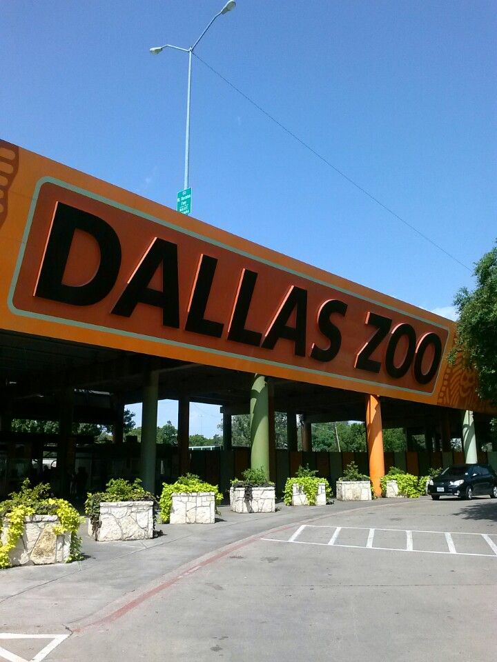 On a gorgeous day, there are few better things to do than head to the Dallas Zoo - home to approximately 8,000 captivating creatures.
