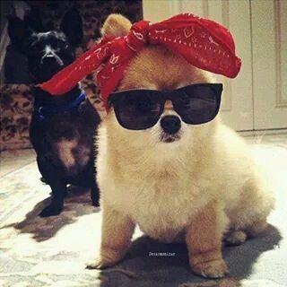 Immagine di dog, cute, and puppy