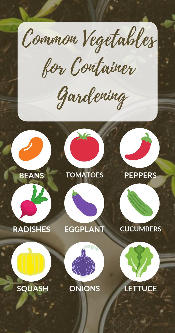Garden Planning | Start your container gardening by getting the care tips here. …