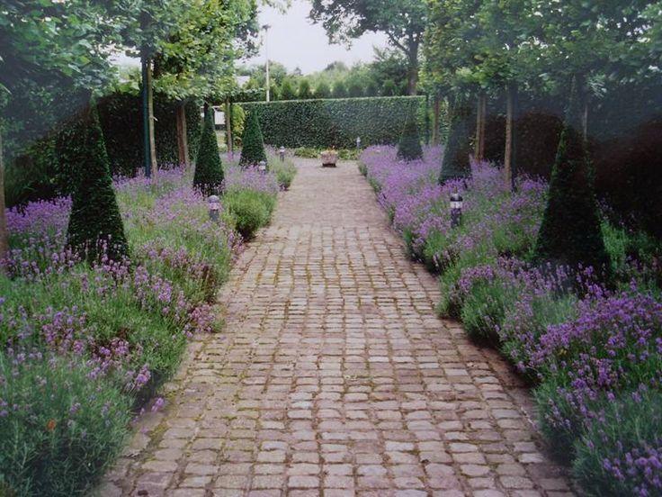 Tuinpad geflankeerd door lavendel als bodembedekker