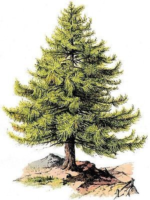 30 Custom Pine Tree Personalized Address Labels
