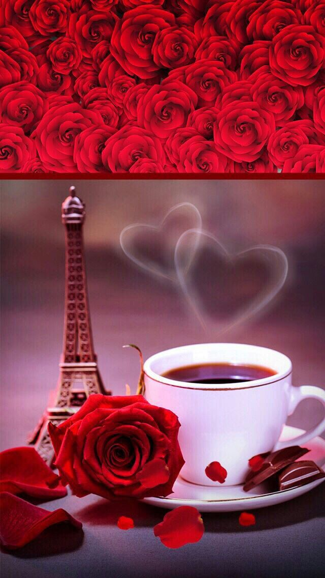 Luana On Twitter Beautiful Roses Beautiful Rose Flowers Telephone Wallpaper Coolest bell flower wallpaper