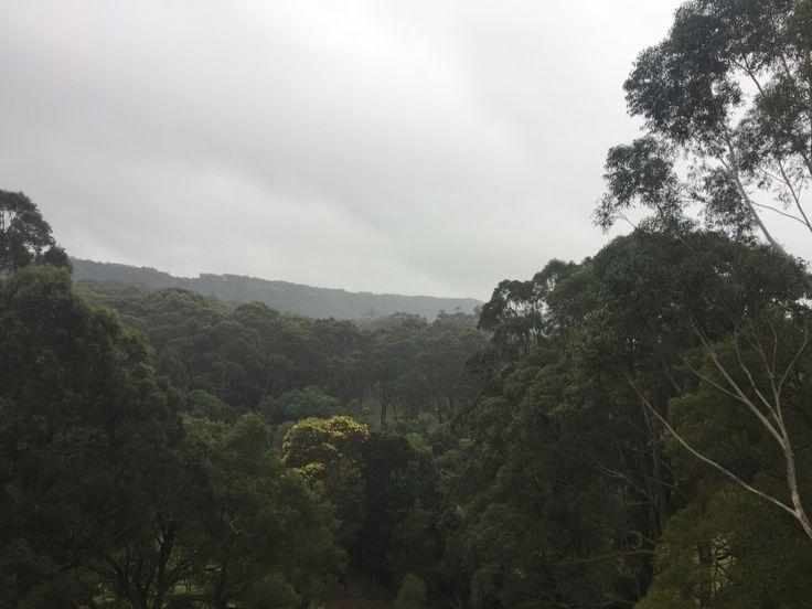 Jungle 🌲🌲