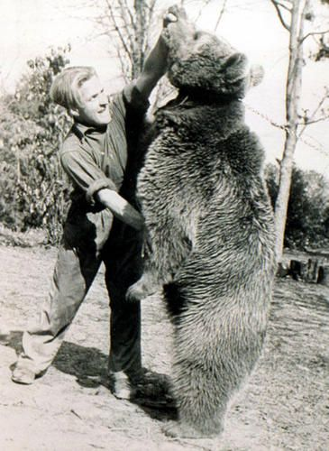 "Wojtek the Polish Soldier Bear at play ... Wojtek, as an adult bear, ""wrestling"" with human comrade"