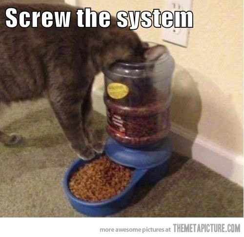 I make my own rules…    This happens more than you even know. :) I love cats.
