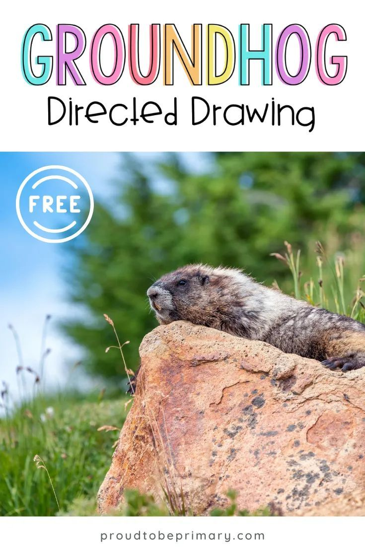 The Easiest Way To Teach Your Students How To Draw A Groundhog Drawing For Kids Groundhog Day Craft Activities For Kids