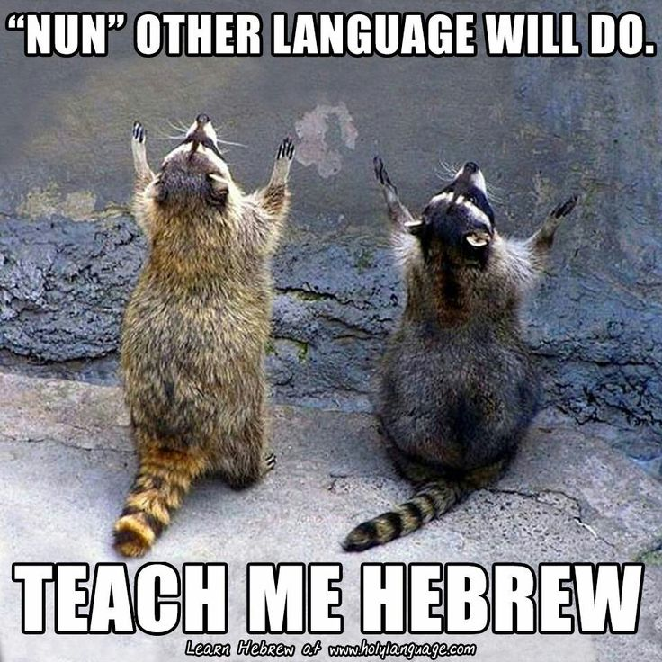 1000 images about hebrew memes on pinterest learn to for Oceanana pier fishing report