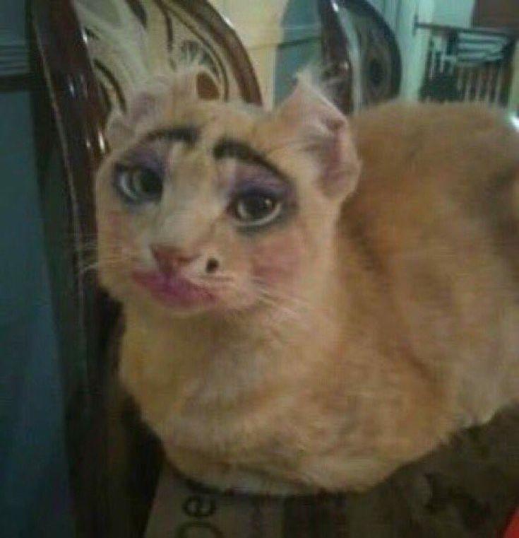 может снимать губастый котик фото комбикорм или