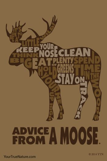 Advice from a Moose