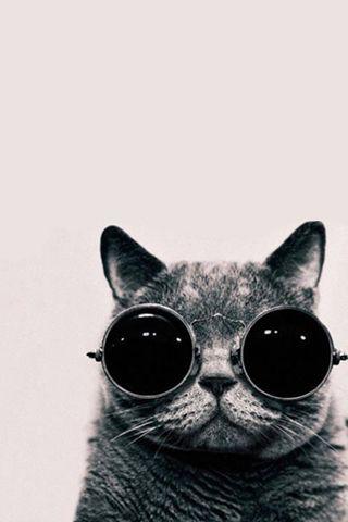 Cat With Galaxy Glasses Background Www Bilderbeste Com