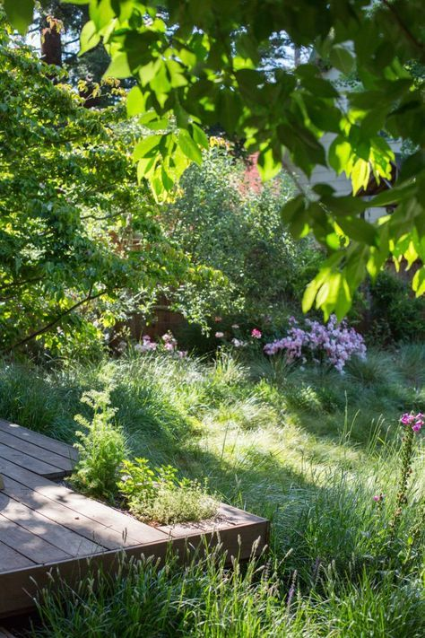 backyard meadow garden Mill Valley Catherine Greg Stern by Mimi giboin