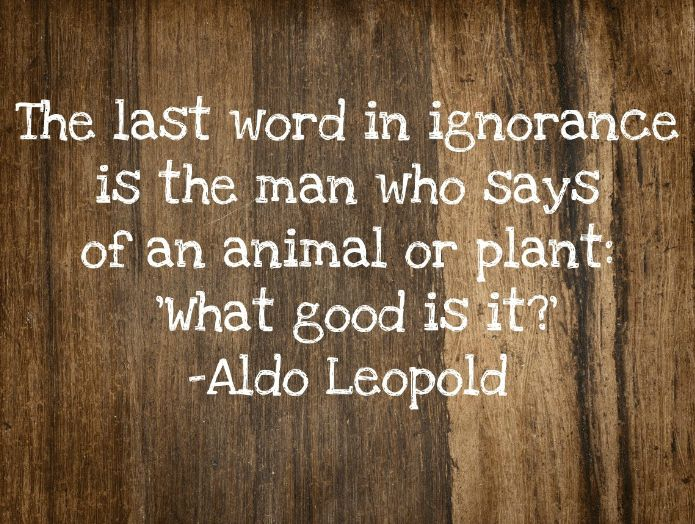 """The last word in ignorance is the man who says of an animal or plant: 'What good is it?"" -Aldo Leopold"