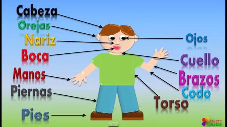 Las Partes Del Cuerpo Para Niños, Our Body Parts In Spanish For Children...