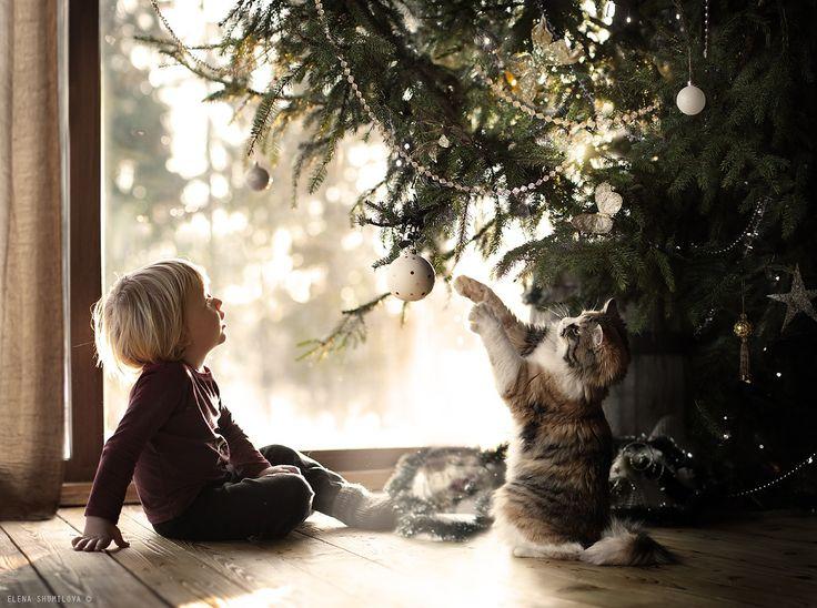 Fotografia sotto l'albero di Natale .. di Elena Shumilova su 500px