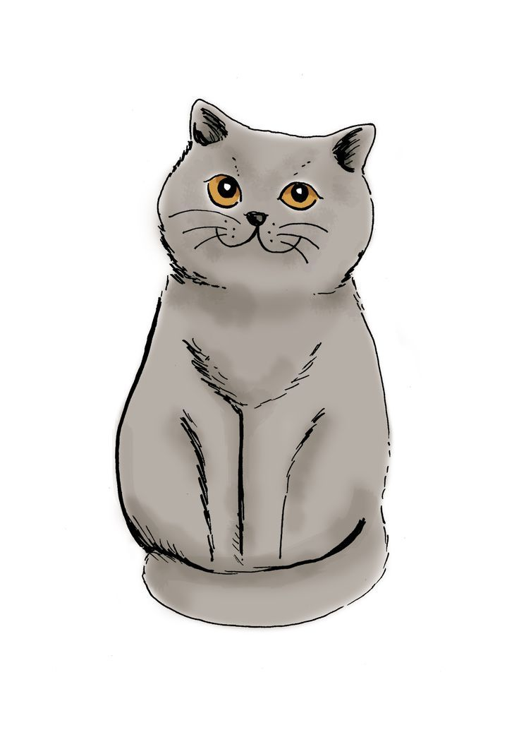British Shorthair Illustration Lorene Russo Cats Illustration Cat Illustration Grey Tabby Cats