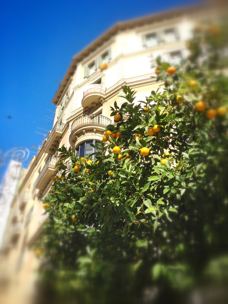 Sun kisses from Barcelona