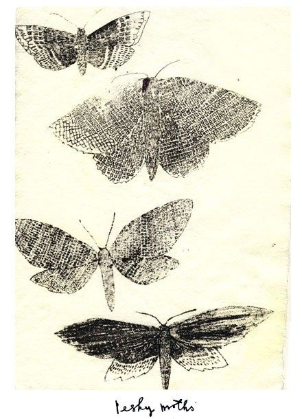 Moths by Charlotte Farmer