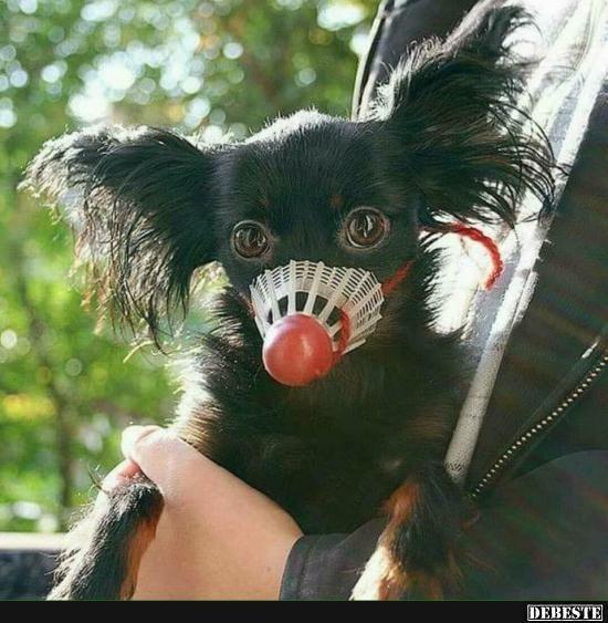 Maulkorb für ganz gefährliche, kleine Hunde :D | Lustige Bilder, Sprüche, Witze, echt lustig