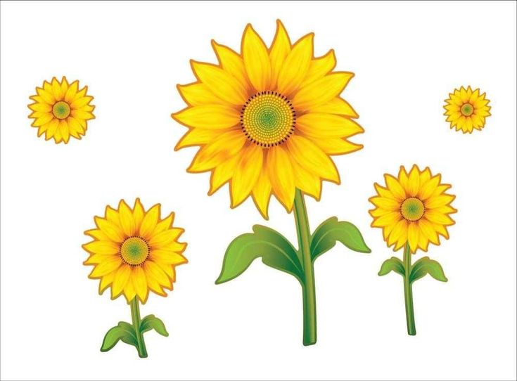 Gambar Animasi Dan Bunga Animasi Bunga Matahari Clipart Best Motivational Hd Wallpapers Bunga Animasi Konten Gr Wallpaper Bunga Matahari Bunga Gambar Bunga