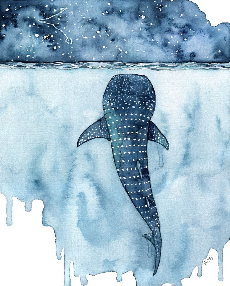 "Watercolor Whale Shark Painting - Print titled, ""Stars Collide"" Whale Shark Painting, Shark, Whale Art, Whale Print, Beach Decor, Stars by TheColorfulCatStudio on Etsy https://www.etsy.com/nz/listing/503587841/watercolor-whale-shark-painting-print"