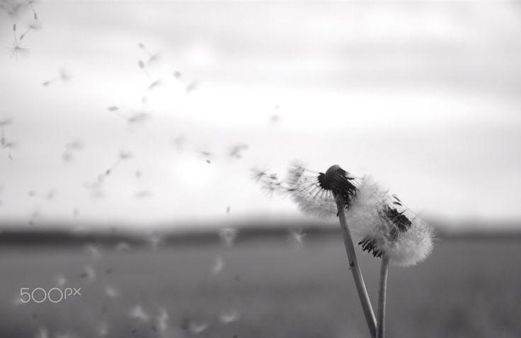 wind - null