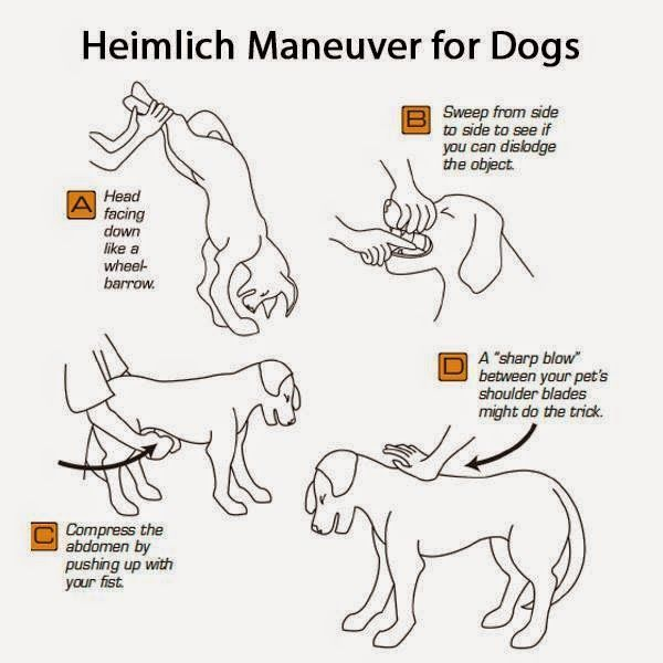 How to Do the Heimlich on Your Chocking Dog - http://www.training-a-puppy.info/how-to-do-the-heimlich-on-your-chocking-dog/