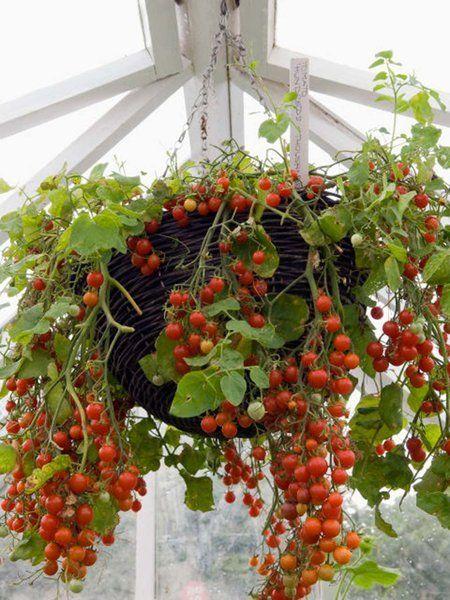 Frutas, verduras y hierbas que puedes cultivar en cestas