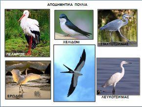 Τα αποδημητικά πουλιά