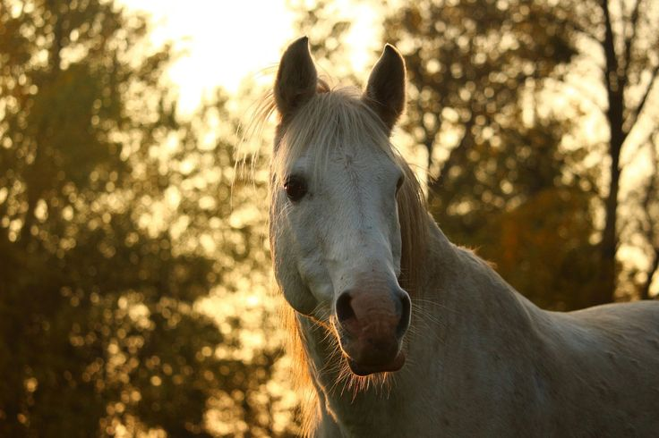 Love horses and wine? Enjoy this unique Tuscan experience: horseback riding and a wine tasting session at Azienda Agraria Le Crete, in Siena. Two nights in a typical farm with dinner included. Find out more on Faberest.