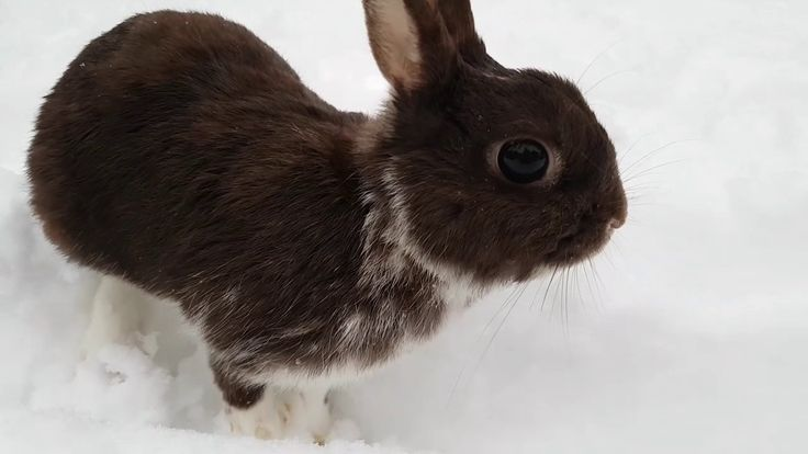 My Name Is Askim// CUTE little baby bunny playing in SNOW     #Askim, #Babies, #…